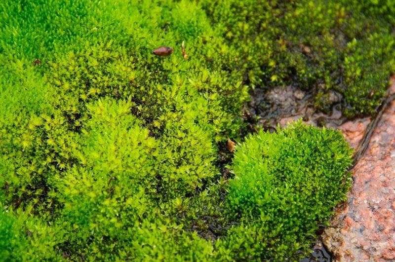 Dazzling green moss