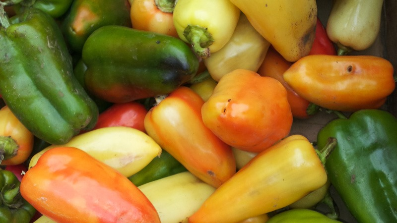 Bell peppers of all kinds