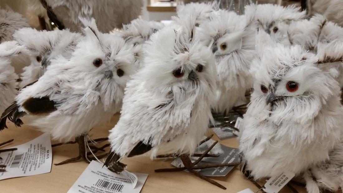 Hairy Owl
