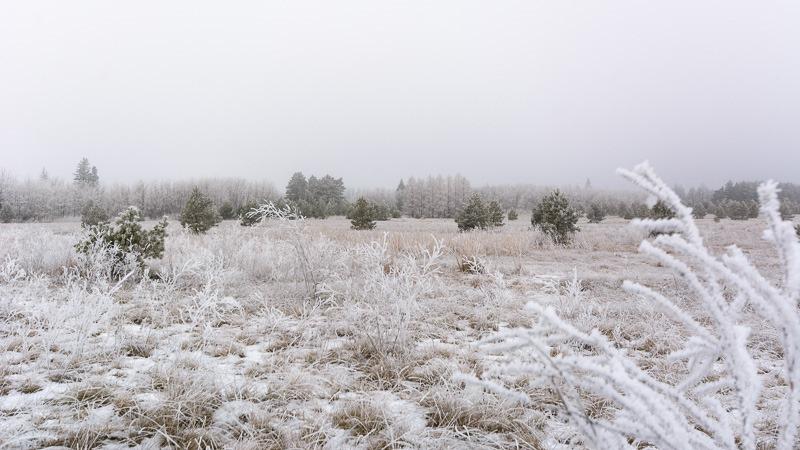 Frosty expanse