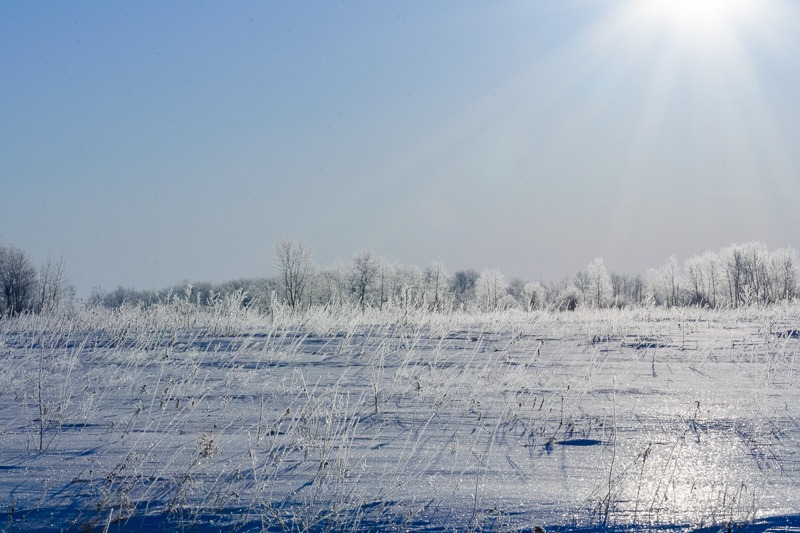 Hoarfrost, clinging to grass blades