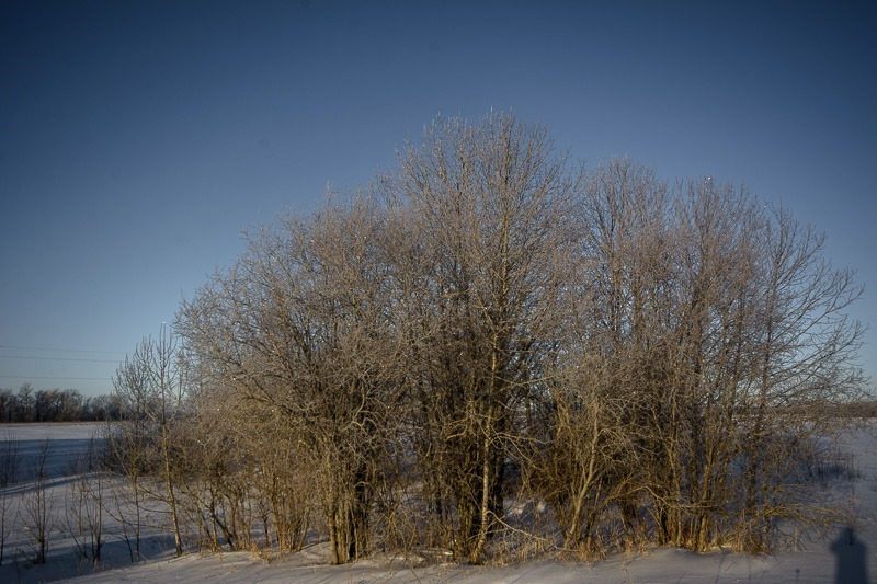 Mother Nature's Christmas Lights