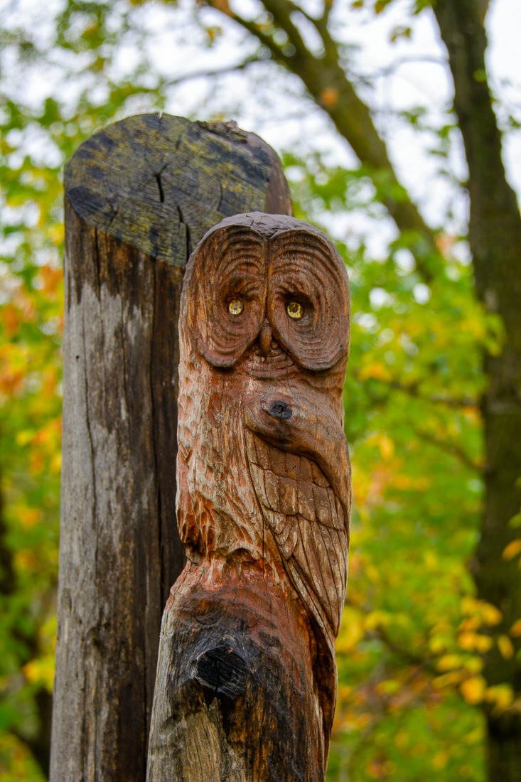 Great Grey Owl carving