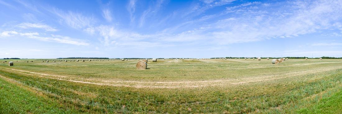 Hay field near La Riviere, MB