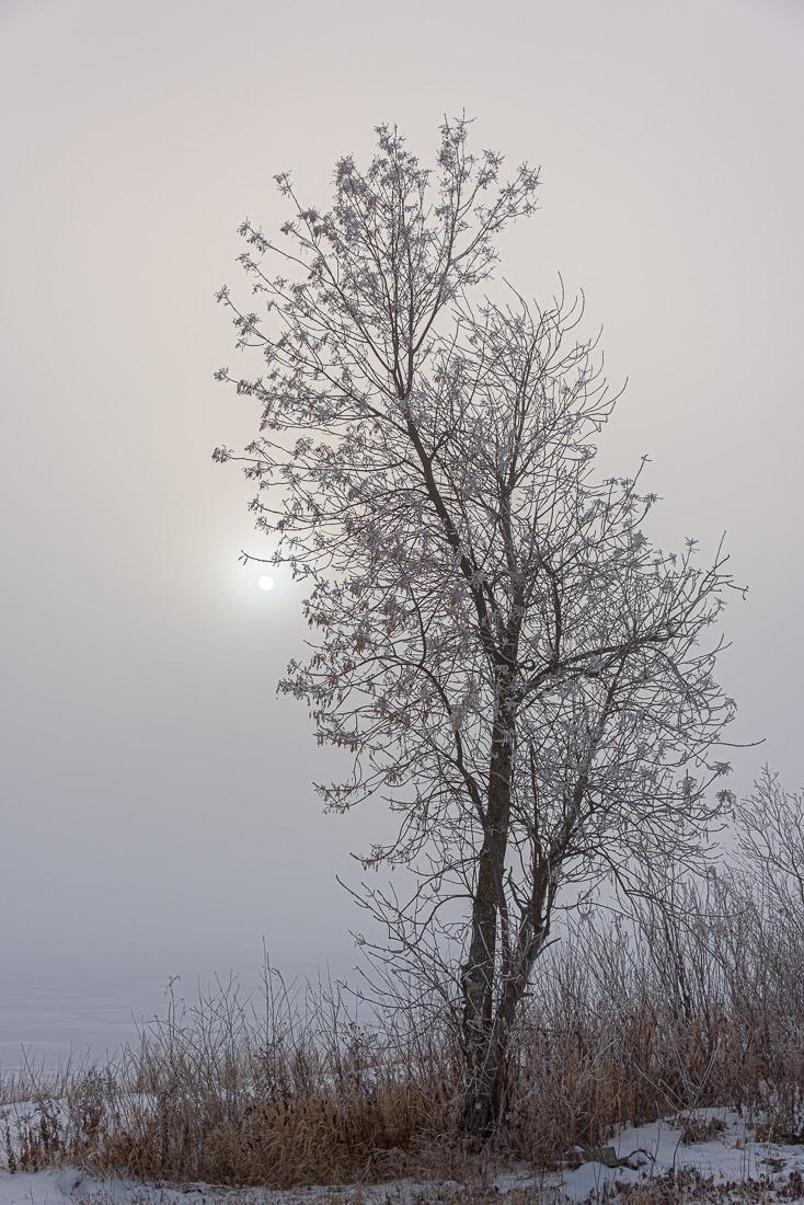 A bleak sun through a tree