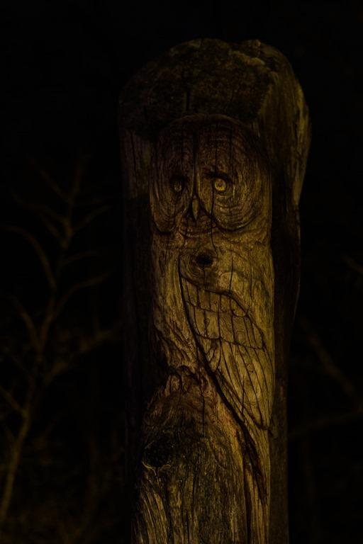 Empty gaze into the night