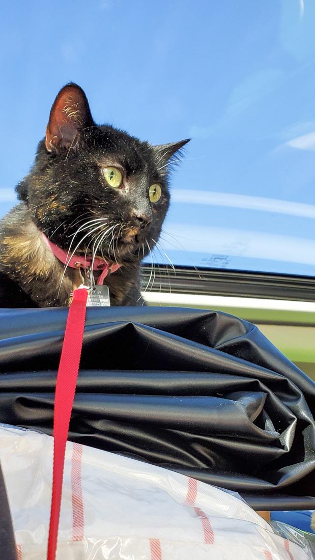 Mia overseeing my driving skills