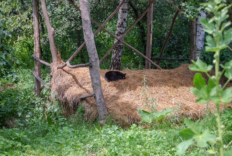 A cat nap in a haystack