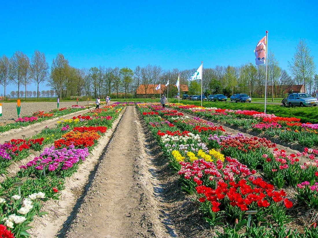 Noordoostpolder, Holland