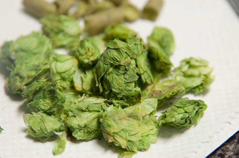 Hop, in two different forms