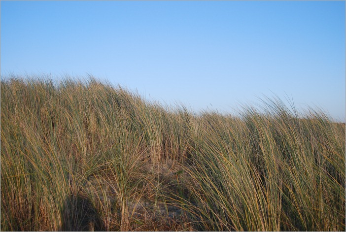 Dune grass with self portrait shadow
