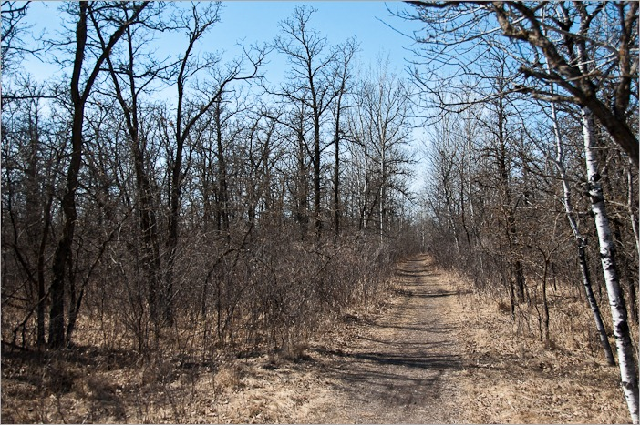 The trails in the Assiniboine Forest