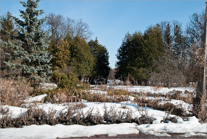 English garden in Winnipeg