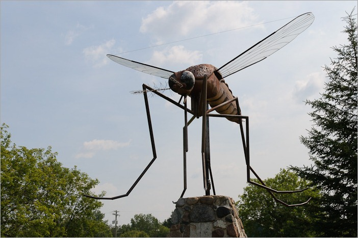 Giant mosquito in Komarno, MB