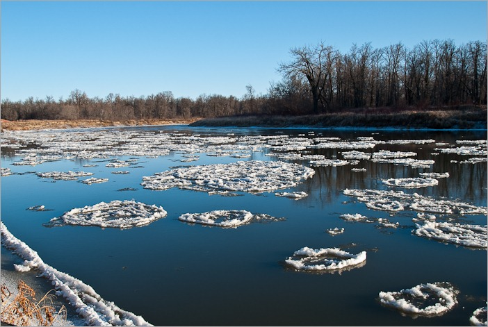 Young ice on the Assiniboine River